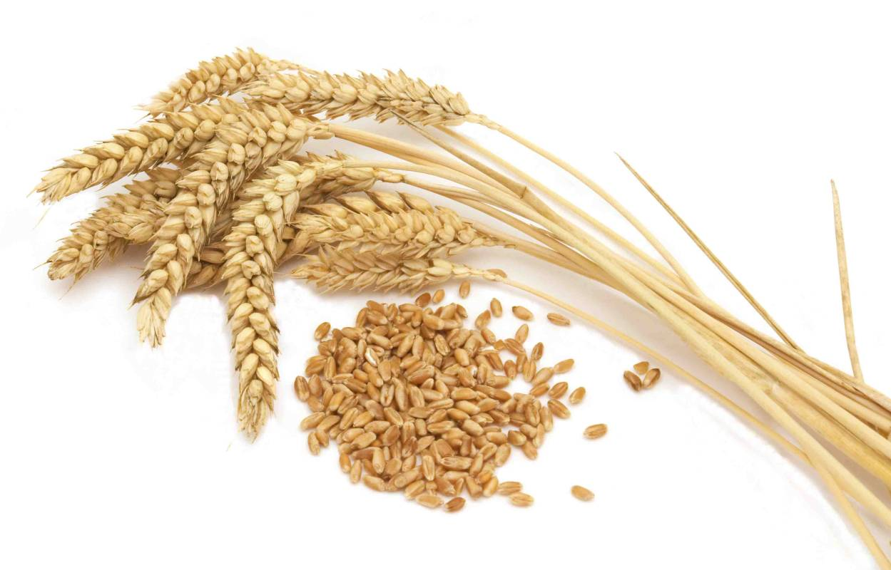 What is gluten anyway?